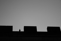 The guard (La mirada de Mara...) Tags: sky bw silhouette canon puente maria pigeon paloma praha praga silueta eos400d