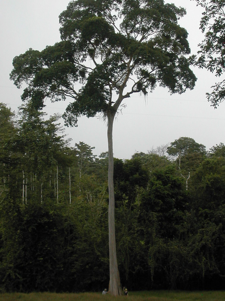 Tree Banking Inc.