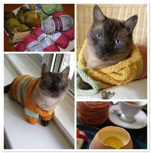 Yarn 2, Cat 0