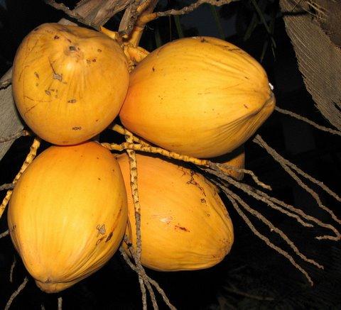 coconuts Kochi taj malabar 260807