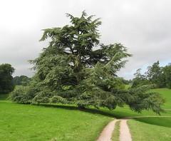 Lone Tree (eloc) Tags: uk tree abbey nt derbyshire lone nationaltrust derby lonetree calke ticknall calkeabbey