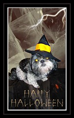 Happy Halowe'en (C. Pedersen) Tags: selfportrait black bird halloween photoshop altered dark pumpkin happy costume scary blood flickr photos witch trickortreat christina shih tzu images photographs piture polly says raven 2010 baily holidaycards pedersen cpedersen