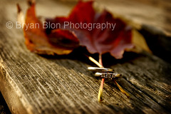 Wedding and engagement rings. (Bryzzel) Tags: wood wedding texture leaf engagement couple bokeh pair band marriage ring unite
