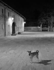 Nichelino Scheggia (scheggia Foto) Tags: bw italy dog torino nikon italia bn piemonte 1855 sreet notturno nichelino d5000