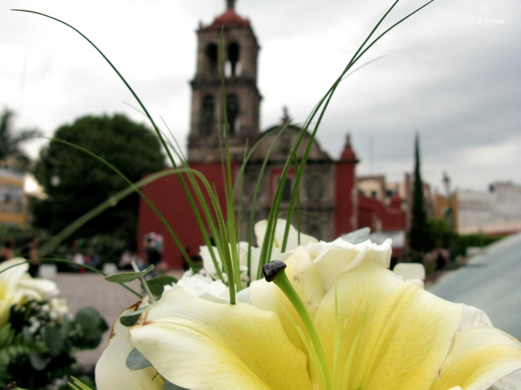 Matrimonio Y Mortaja : The world s best photos of irapuato and templo flickr