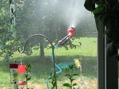 Misting for the hummers