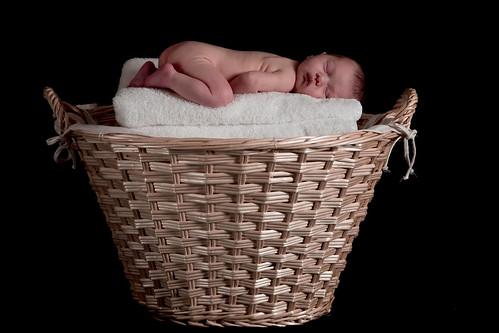 Lauren in Basket
