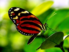 Butterfly at Tucson Botanical Gardens by khasan