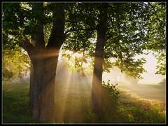 View Hommik on tulnud- Morning has broken on Flickr