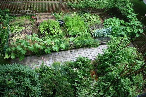 garden aerial august 6