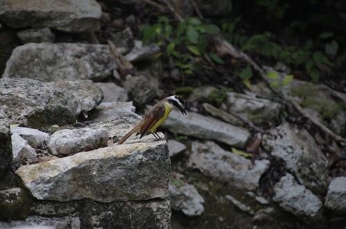 coba_bird