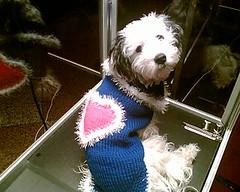 nandopulli2 (bigmamainge) Tags: ski wool hat warm handmade top crochet handknit mohair angora poncho shrug bommel pompom dogsweater tasche ponpon handknitting schal norweger schafwolle zipfelmtze dogsfashion pellerine hundemantel bigmamainges hundepullover schlupfmtze wintermtze thickwool