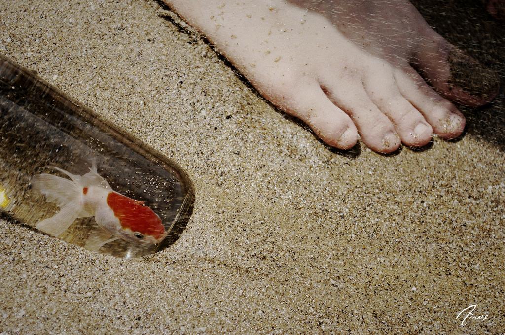 金魚 和 海。
