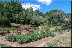 Roadside vegetable garden Ardeche