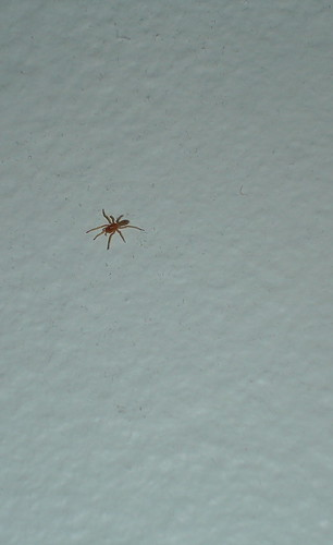 Spider on my Wall