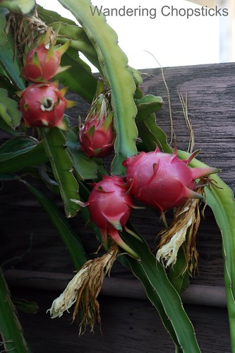 10.13 Whoa! Dragon Fruit! 5