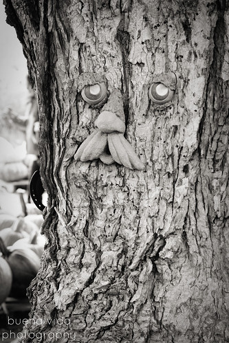FacesinNature