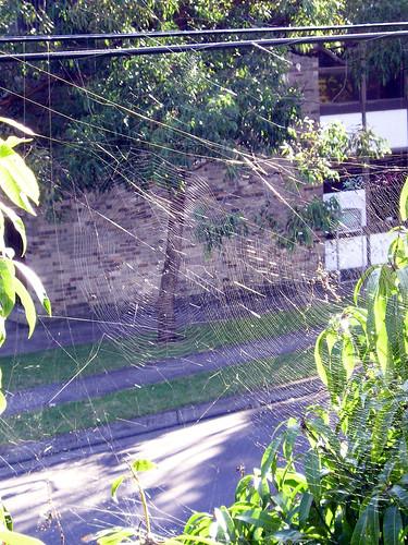 spider web empire