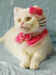 Hello Kitty cat costume