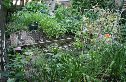 garden from the back