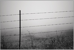 protect all that is sacred (H2ORANGE) Tags: white mountain black beautiful canon fence out wire gate day cows sonoma highland keep barbed enemies sigma1020mmex