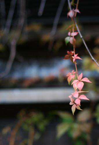 Autumn Colours -7