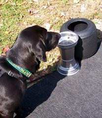 Lilah_racedog