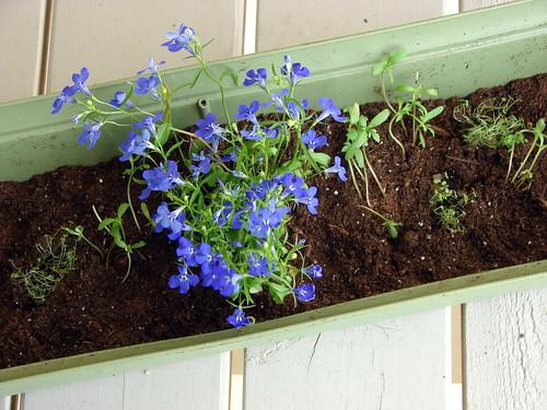 Planting Starter Plants