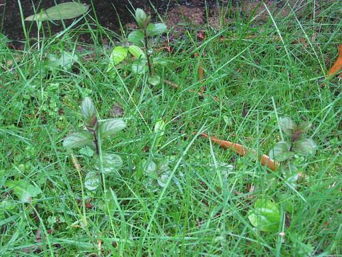 garden 2010 05 12 001