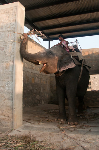 RYALE_Elephant_Village-78