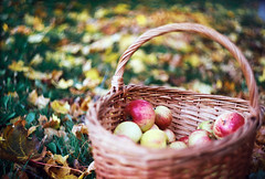 apples (Liis Klammer) Tags: autumn film grass leaves analog 35mm estonia basket bokeh apples zenit eesti zenitet