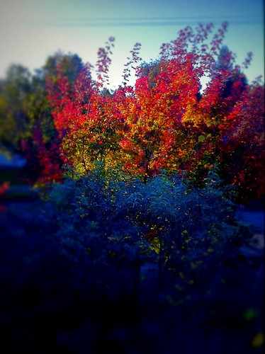 Fall glows in our garden