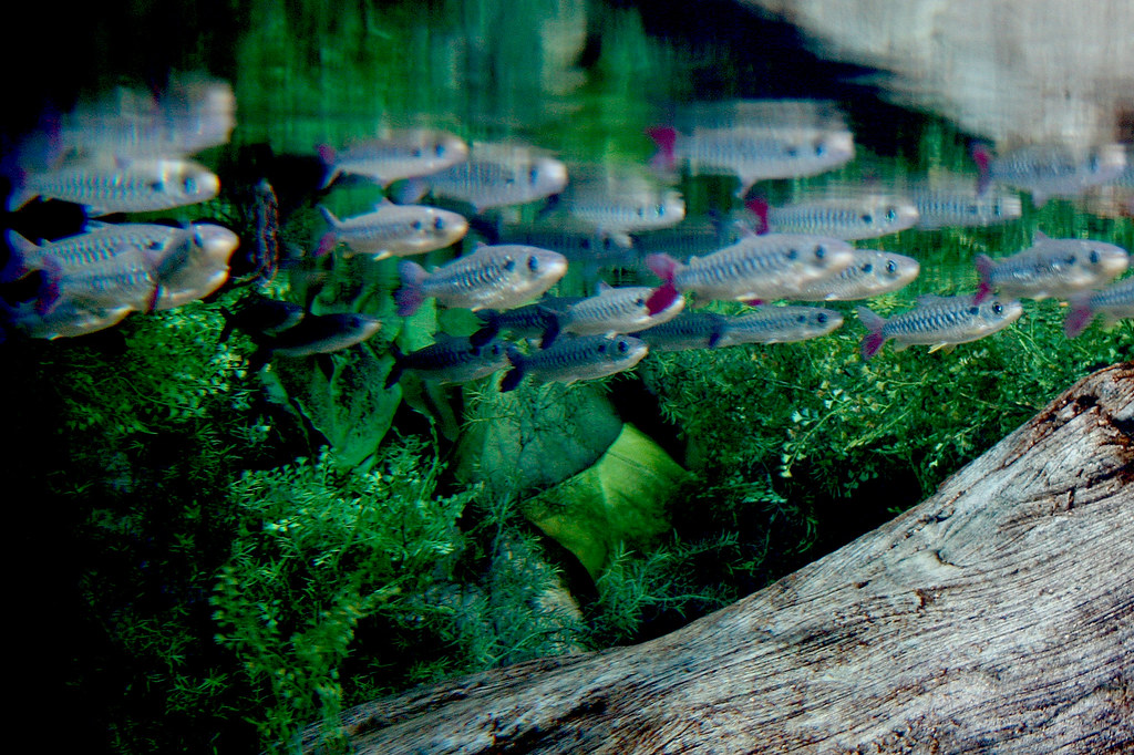 fish 2 ©2007 RosebudPenfold