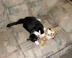 B-bass vs the tiger
