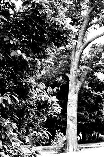Leaves 'n Tree