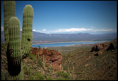 (ArizonaBabyDoll) Tags: arizona cactus lake heidi nikon desert arizonababydoll