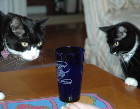 What ya drinking?