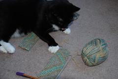 Maggie vs. Socks in Progress