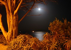 Cascais in moonlight......... (ubichan - Away A LOT :o() Tags: ocean travel trees sea summer vacation moon reflection portugal geotagged mar europe nightlights nightshot sony nighttime lua moonlight atlanticocean cascais masterclass theperfectpicture ip3 postaisilustradosdeportugal sonydsch9 ilustrarportugal ip6 ubichan passionforlight aboutiberia portugalmagico portugalmgico perfectioninpictures mygearandme mygearandmepremium mygearand
