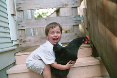 truman loves mathilda (cafemama) Tags: chicken august hen truman mathilda 2007 australorp trumanhanson urbanchicken august2007 urbanchickens