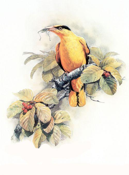 1474341333 502631169c o - cute bird paintings