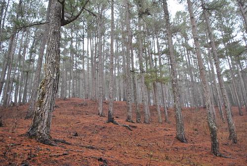 dry_trees