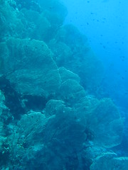 (Andurinha) Tags: redsea diving buceo marrojo rasumsid