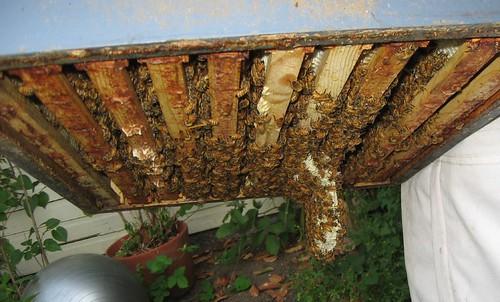 Beekeeping 2332