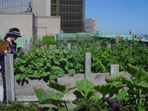 Rooftop Herb Garden at Royal York Hotel