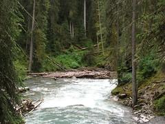 busy beaver? (offonmars) Tags: alberta canadianrockies johnstoncanyon