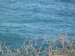 Day9_Maui_Road_to_Hana_4 (Amudha Irudayam) Tags: beach hawaii maui driftwood hana amu amudha
