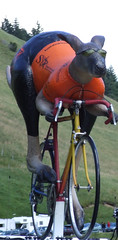 A cycling Kangaroo? What next?!