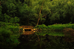 bridge and forest pond (Joel Bedford) Tags: bridge toronto ontario canada green forest photoshop walking relax bedford design photo pond highpark footbridge walk joel relaxing experiment 420 calm zen processing meditation lush jab stroll placid mellow citypark lightroom treatment jalex naturesfinest ontarioparks superbmasterpiece goodplacetosmokeajoint jalexphoto jbedford joelbedford jbedfordphoto