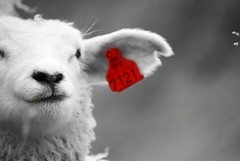 7121 (alternativefocus) Tags: red norway sheep pentax earring lamb 7121 pentaxk10d alternativefocus
